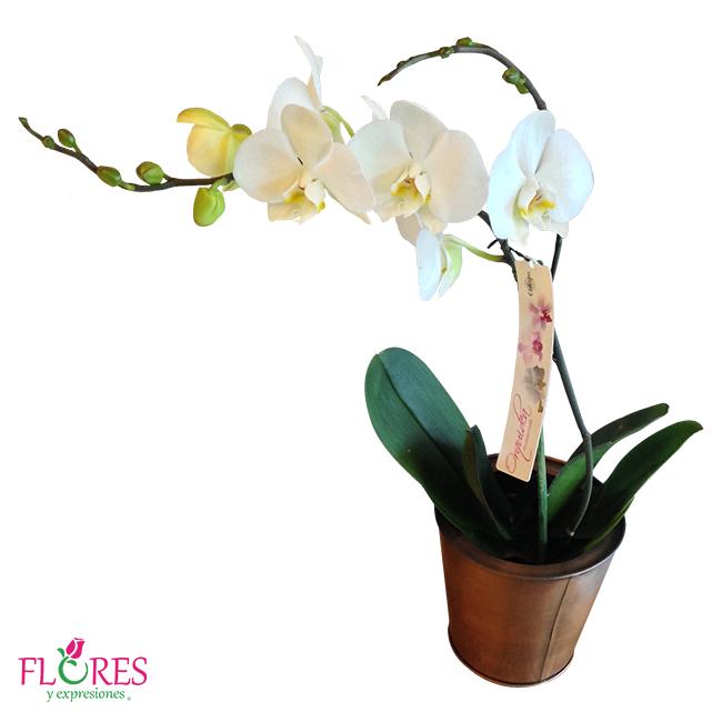 Maceta de orqu deas flores y expresiones - Maceta para orquideas ...